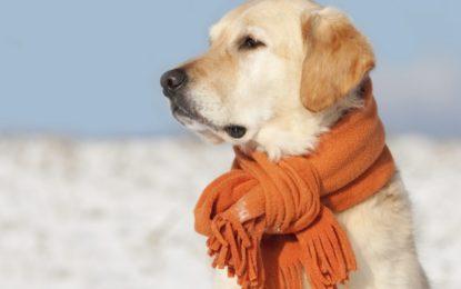 A prevenirse del frente frío número 2
